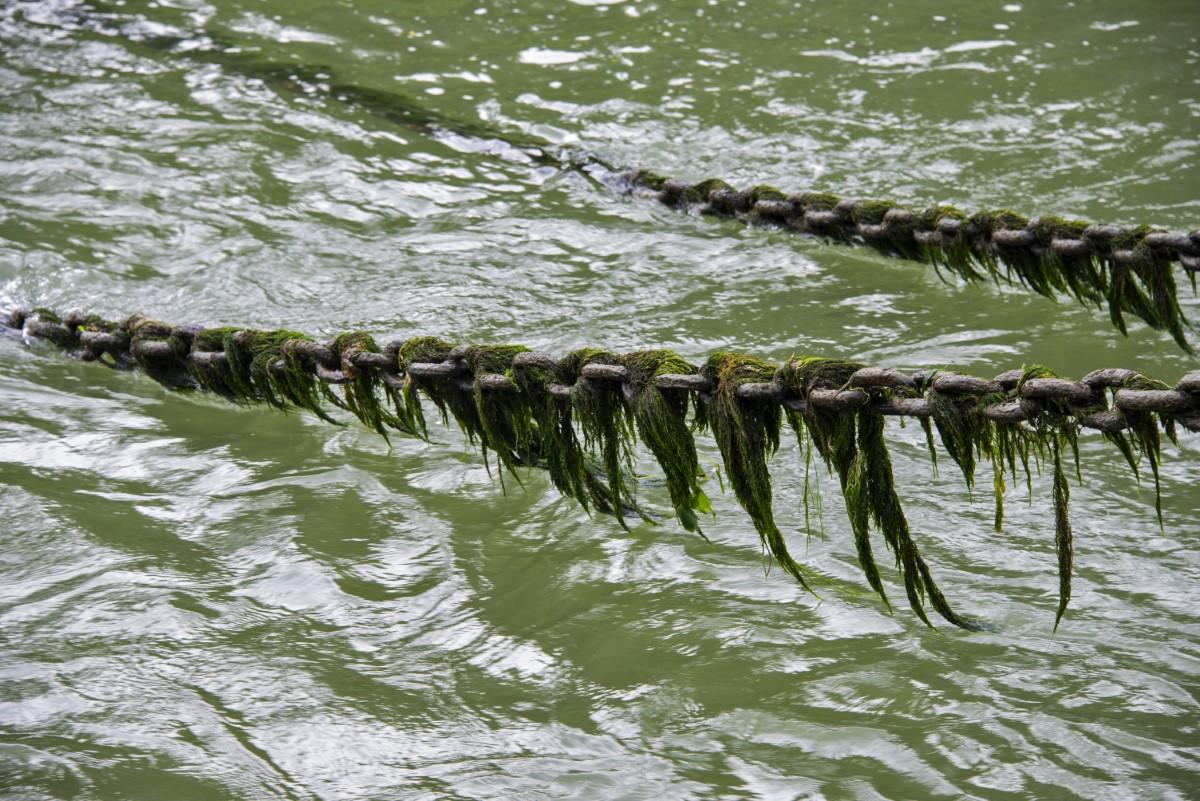 ketting met alg