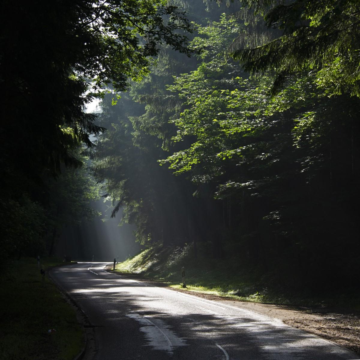 fietsen door het bos.