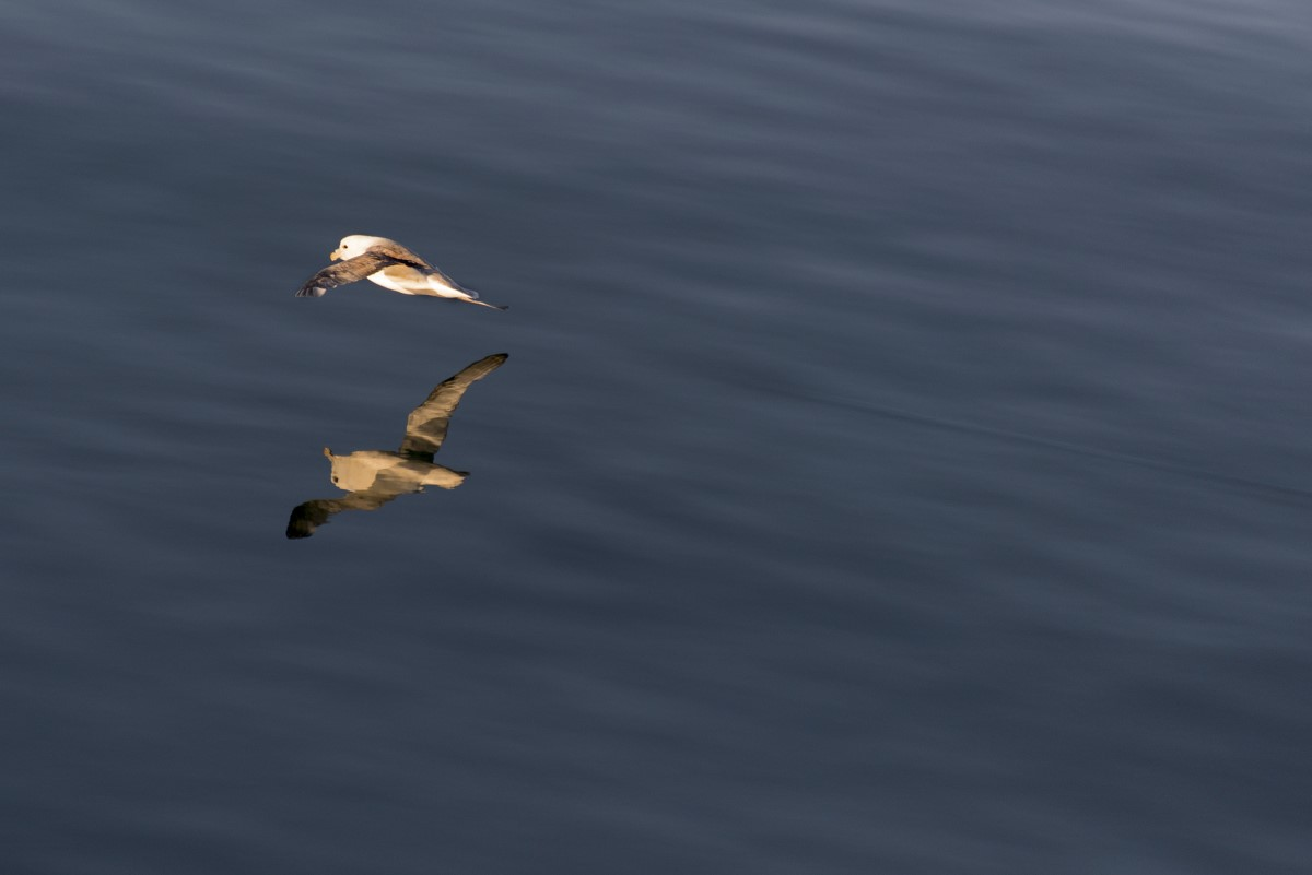 stormvogel spiegeling