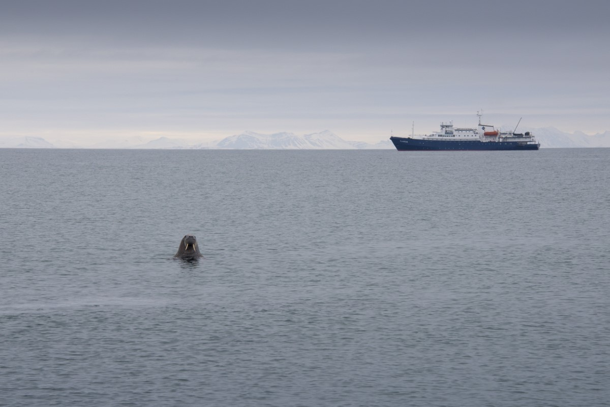 walrus met de plancius
