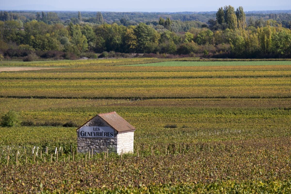 Wijn gebied  regio Côte de Beaune
