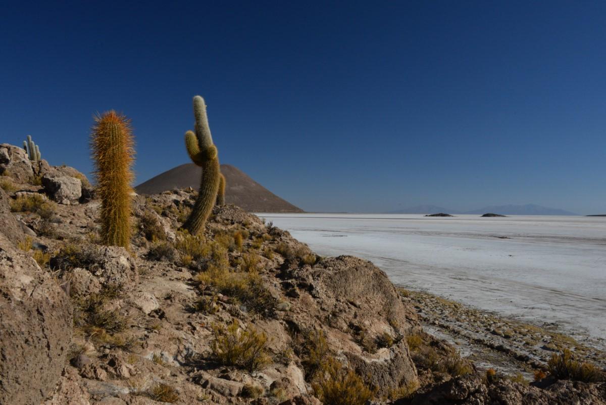 Cactus op Salas Coipassa
