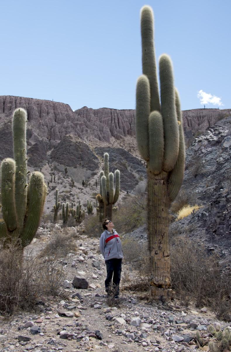 reuzen cactus