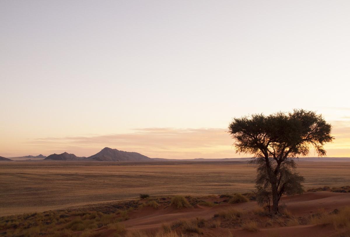 Namieb woestijn