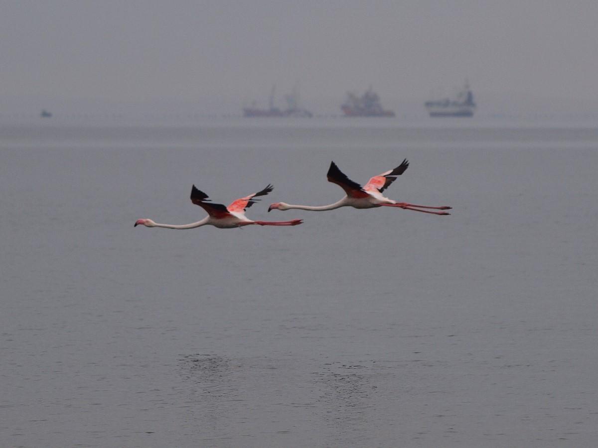 Flamingo\\'s