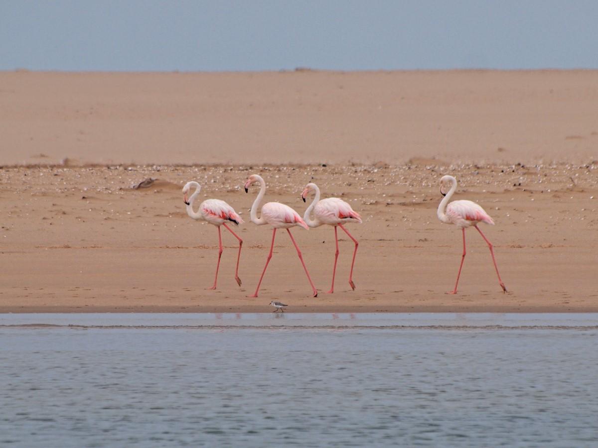 Flamingos op het strand