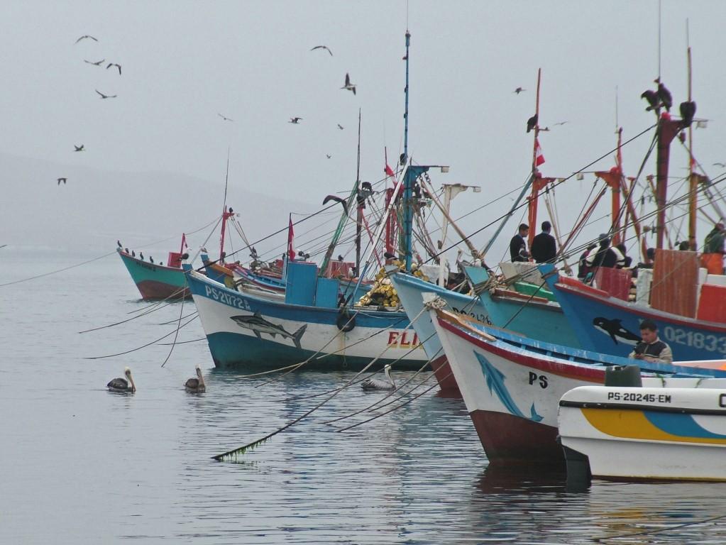 Haven Paracas