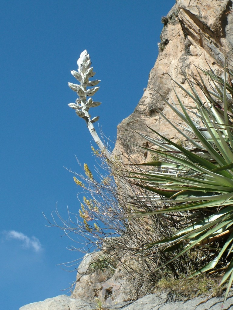 plant in Colca canyon