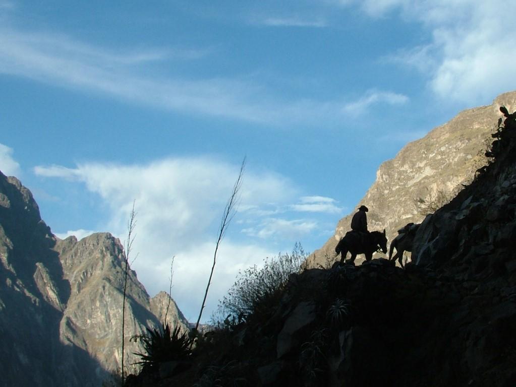 Muildier met berijder in Colca canyon