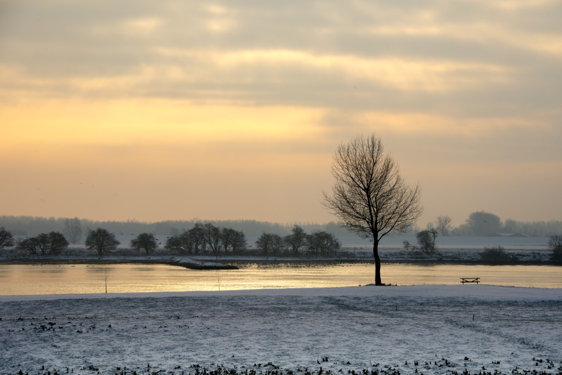 Winter aan de Lek