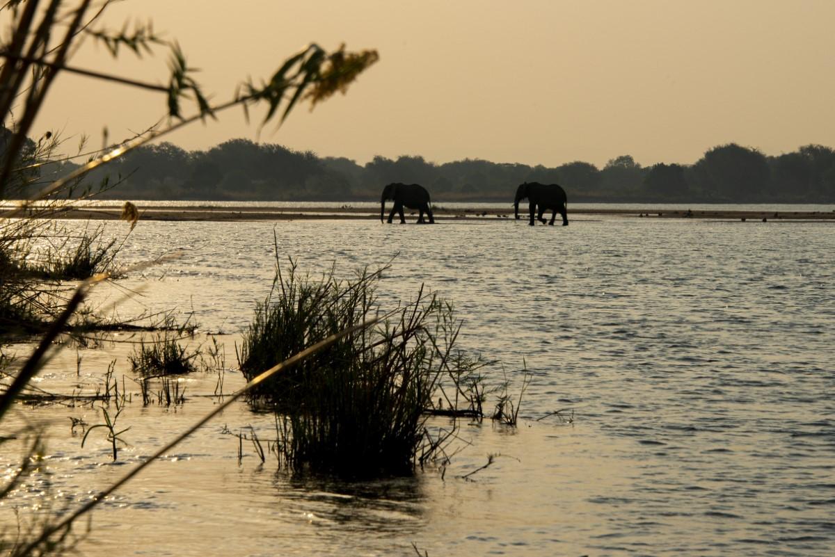 Olifanten steken de zambezi over