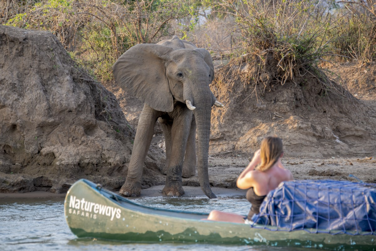 olifant aan de oever
