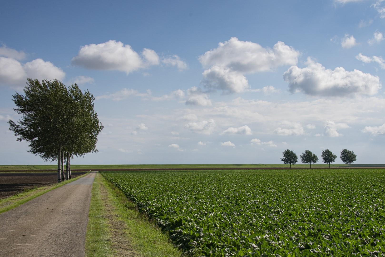 Groninger land
