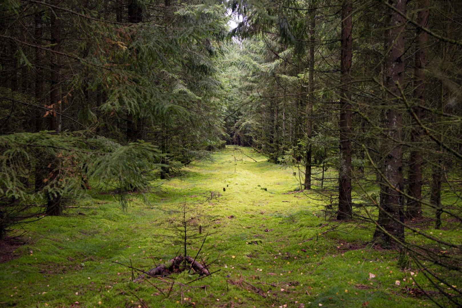Bos in Denemarken