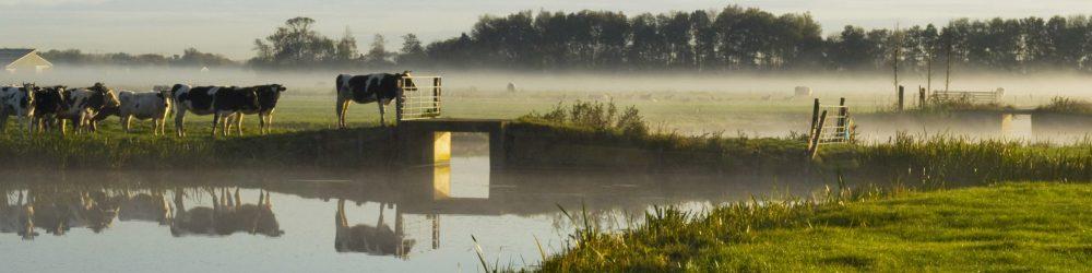 abefoto.nl