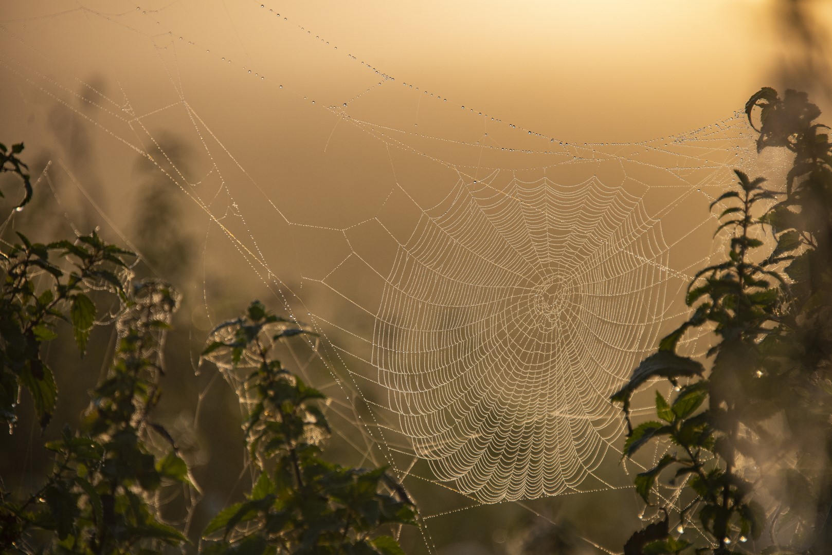 spinnenweb in ochtendlicht